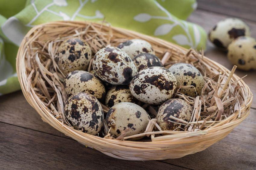 De ce cresterea prepelitelor este o afacere profitabila?