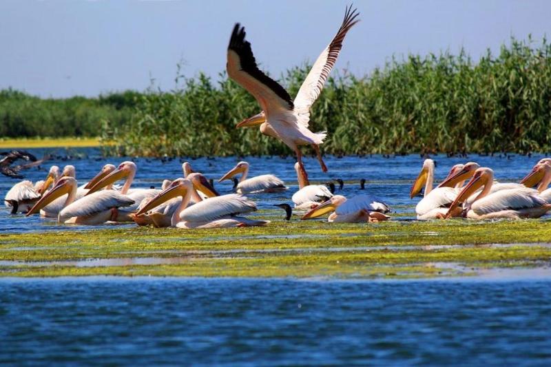 Cele mai interesante locuri de vizitat in Delta Dunarii